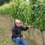 Man checking grapes in Vineyard