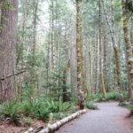 Tree lined Trail in Elk Falls