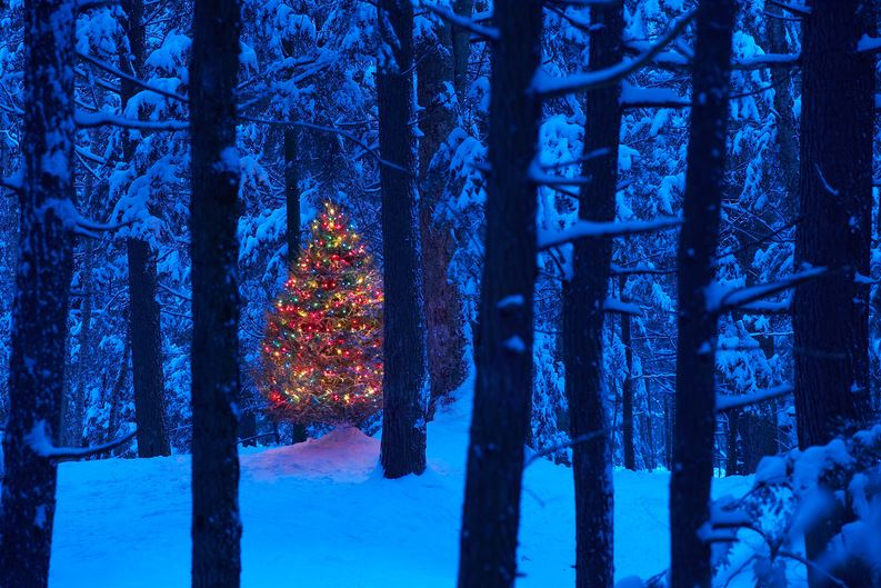 Lit Christmas tree in the middle of a snowy forest