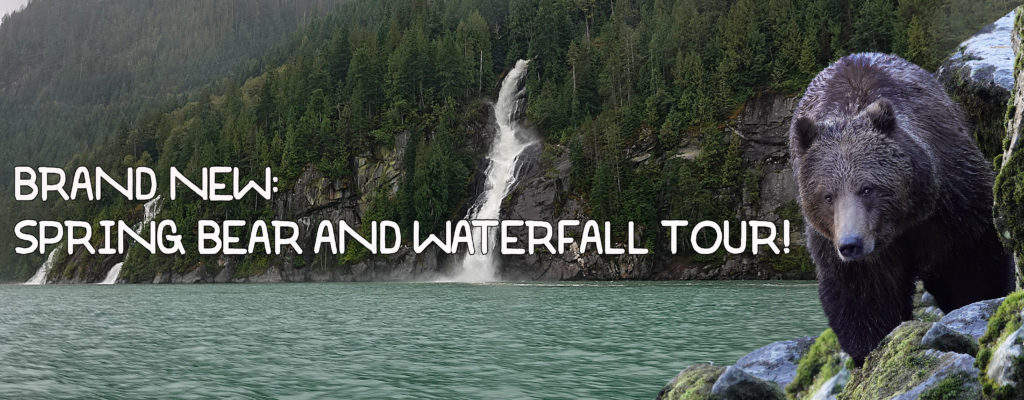 """Grizzly bear on the shore, with a water fall in the back ground reads"""" Brand New: Spring Bear and Waterfall Tour"""""""