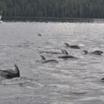 CRWW Boat Dolphins