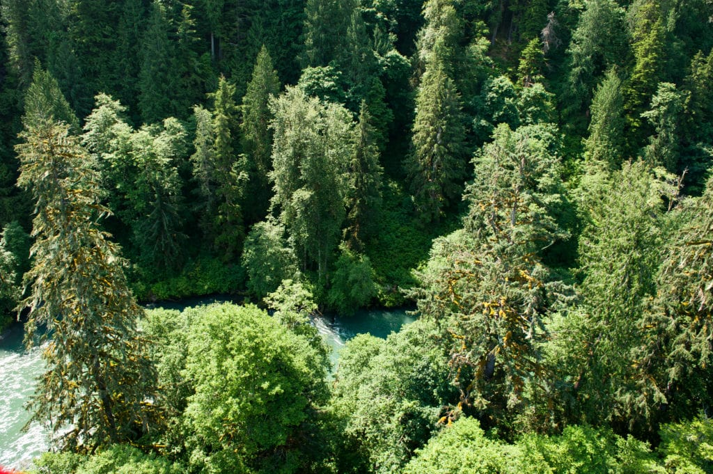 Looking down on large forest with river through the middle