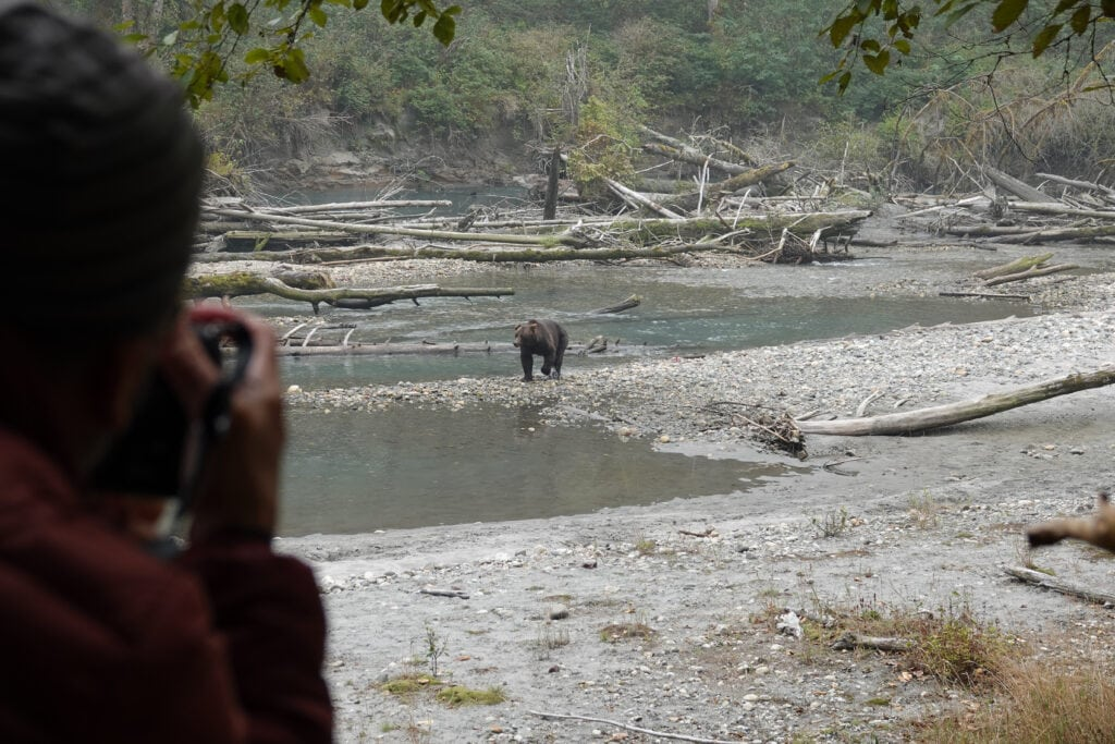 Person taking photo of Grizzly bear along river