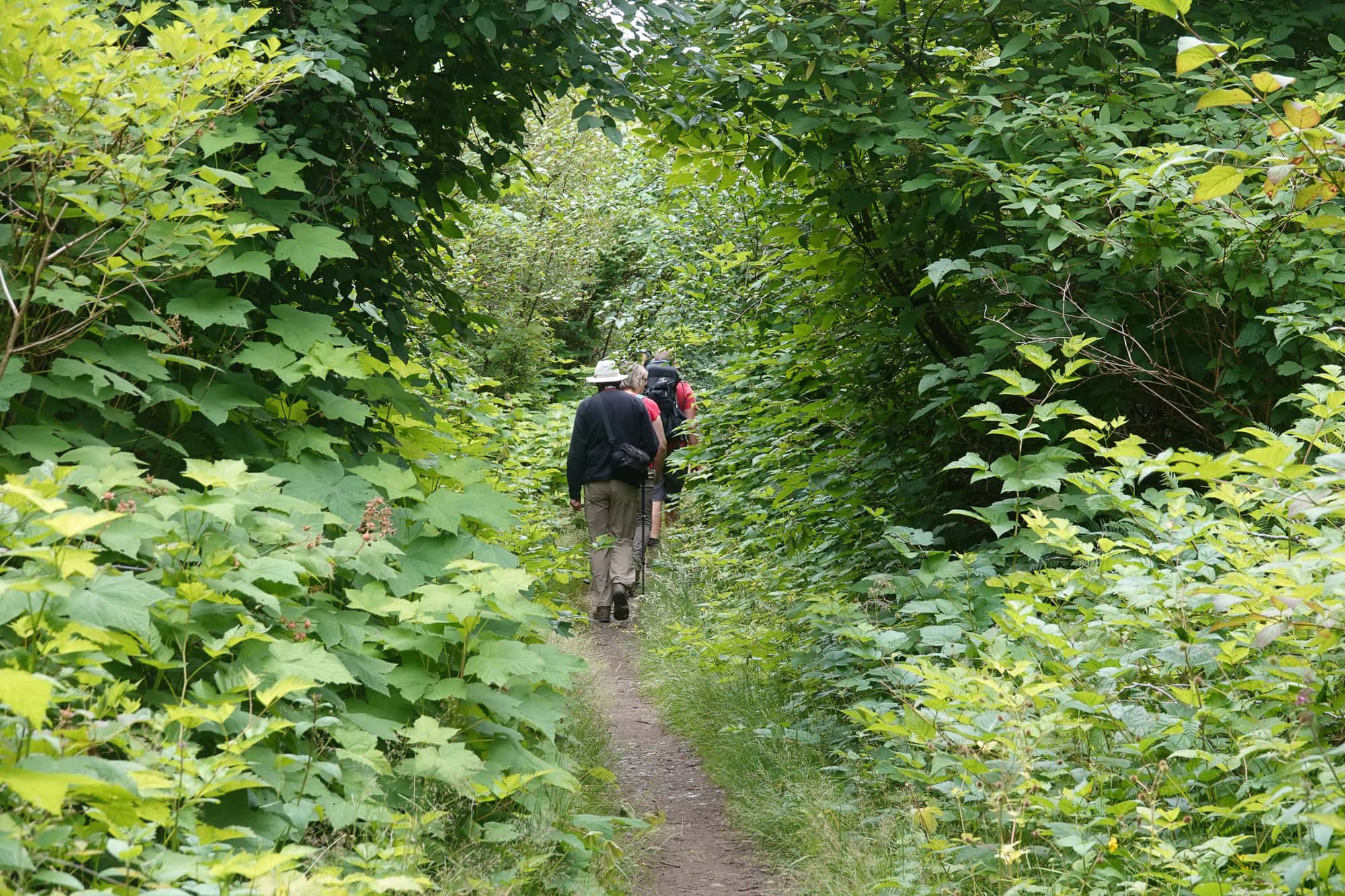 Two people hiking through thick green foliage