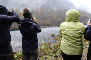 3 people in rain jackets taking photo of grizzly bear in the river in front of them
