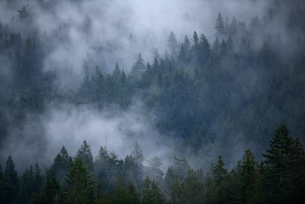 Tree covered hillside with fog and mist in the trees